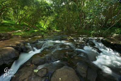 Where the River Divides This shot is from just above Ho'opi wafterfall along the Kapa'a river on Kauai.  The falls are wonderful, but the stream above the waterfall is a peaceful, natural garden.  With the sunlight streaming through, I snapped this shot.