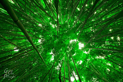 Bamboo cluttered forest up