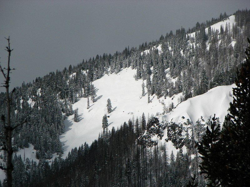 Slopes of Elk Mountain