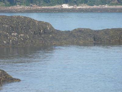07-2015 Hermit Island Maine