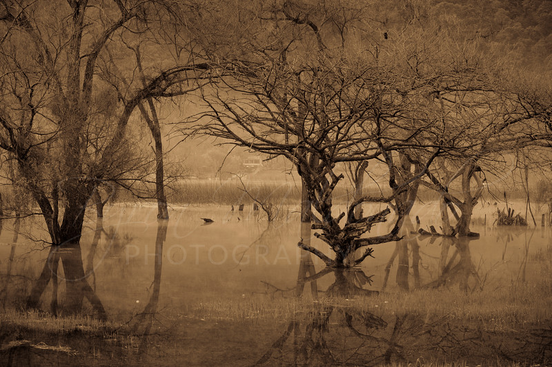 San Lucas Toliman, Trees under water
