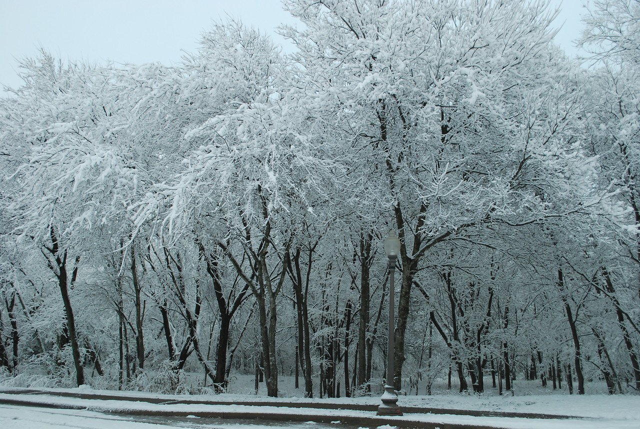 A view of the natural area across the street from our house.