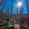 32  G Vista Ridge Snags Sun
