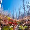 34  G Vista Ridge Snags and View