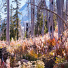 44  G Vista Ridge Snags and Trail