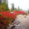 30  G Acadia Color Trail Rock