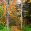 2  G Path Through Trees