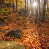 44  G Trail and Leaves V