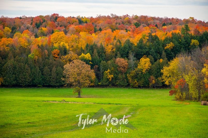 1  G Quebec Fall