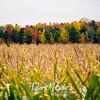 22  G Quebec Fall Corn