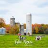 9  G Quebec Fall Cows