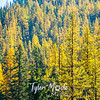 67  G Icicle Canyon Views Larches