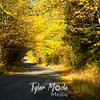 81  G Road in Fall