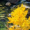 79  G Icicle Canyon Views Yellow Tree