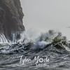 15  G Cape D Waves Close