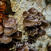 21  G Mushrooms Close