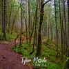 14  G Trail
