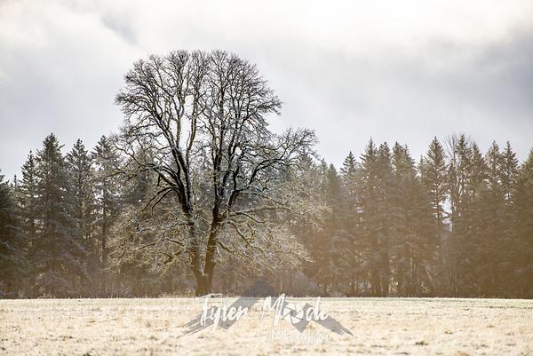 1.14.20 Snow Dusting Clark County