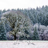 21  G The Old Tree Snow