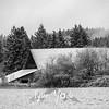 29  G Snowy Barn BW