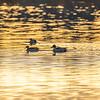 2  G Morning Ducks