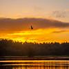 26  G Sunrise Calm Water Swan V