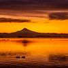 24  G Columbia River and Mount Hood Sunrise Ducks