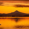 35  G Columbia River and Mount Hood Sunrise Ducks