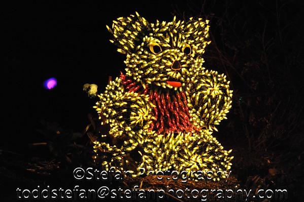 12-30-2014 BBG Garden Lights