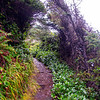 35  G Coastal Trail V