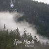 10  G Fog in Trees