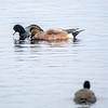 2  G Ducks