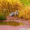 6  G Eating Otter