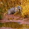 14  G Otter Eating Fish
