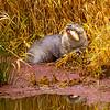 19  G Otter Eating Fish