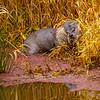13  G Otter Eating Fish