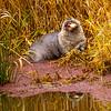 25  G Otter Eating Fish