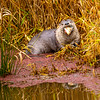 24  G Otter Eating Fish