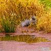 8  G Otter Eating