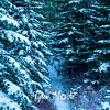 23  G Snowy Path Close
