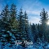 21  G Snowy Trees