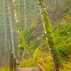 5  G Trail and Bridge V