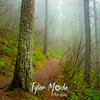 16  G Trail and Fog S