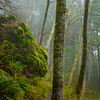 4  G Trail and Fog V