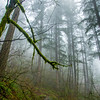 26  G Fog and Trees V
