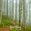 20  G Trail and Fog