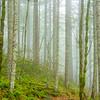 18  G Trail and Fog V