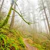 27  G Trail and Fog V