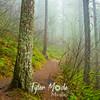14  G Trail and Fog