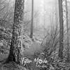 15  G Trail and Fog BW